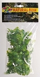 Zoo Med Natural Bush Plant Amazonian Phyllo Small
